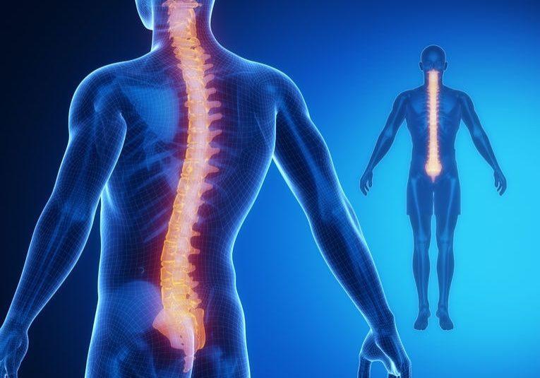 38934686 - spine bone anatomy x-ray scan